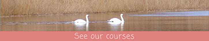 See our courses